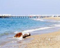 Antalyada tatilcileri şoke eden görüntü!
