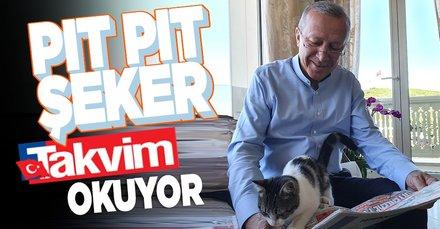 Başkan Recep Tayyip Erdoğan torunu Aybike'nin kedisi Pıt Pıt Şeker ile Takvim gazetesini okuduğu anları paylaştı
