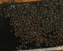 Arı dehşeti! Ölü ve yaralılar var