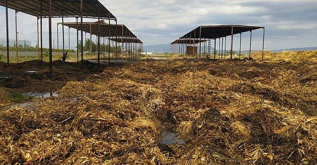 Aydın'da korkutan yangın! 600 ton saman kül oldu
