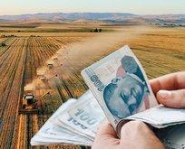 Samsun'da 36 bin üreticiye destek ödemesi başladı