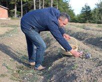 Kilosu 60 bin lira! Yarım kilogram için 80 bin çiçek...