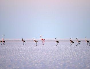 Tuz Gölü kuş cenneti turistlerin akınına uğruyor