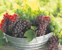 İstanbul'un artış şampiyonu üzüm