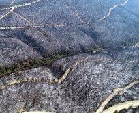 Orman yangınıyla ilgili 3 kişi gözaltında