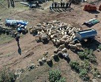 70 koyunu telef olan aileye 120 koyun hediye edildi
