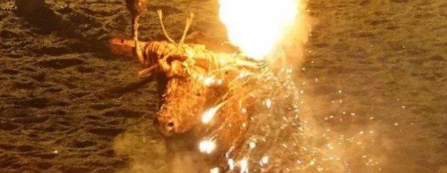 İspanyada canlı boğayı ateşe verdiler