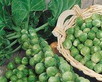 Brüksel lahanası katarakttan korur