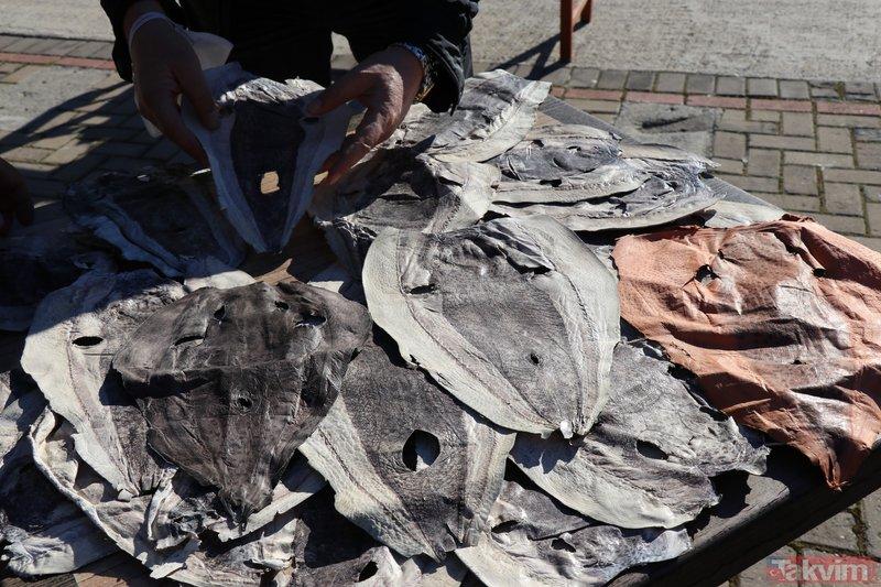 Balıkçıların kabusu oldu! Balon balığının derisiyle ayakkabı cüzdan çanta üretilecek