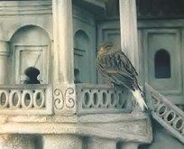Kuş evleri yeniden hayat buluyor