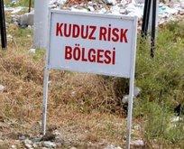 Denizli'de 5 mahallede kuduz karantinası