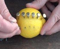 Rus mühendis limon ile inanılmazı başardı!