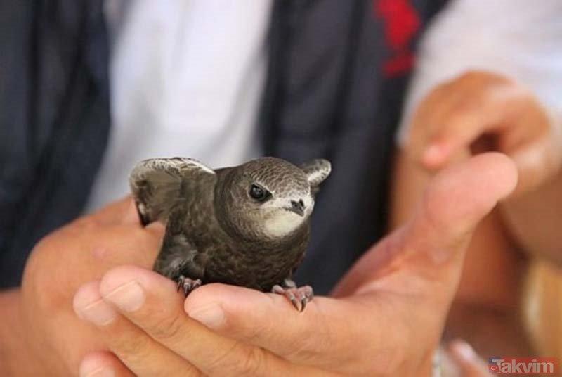 İsmi Kuranda geçen Ebabil kuşu Erzurumda bulundu