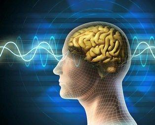 Uzmanlar açıkladı! Bu besinler beyninizi geliştiriyor