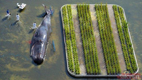 Nehir kıyısında İspermeçet balinası görüldü
