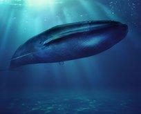Aileler dikkat! Ölümcül oyun Mavi balina geri döndü!