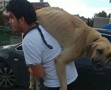 Duygulandıran anlar! Hasta köpeği böyle taşıdı