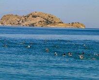 Türkiye'de tek! Denize kıyısı yok ama mavi bayrağı var!