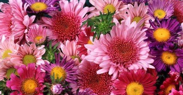 Rüyada çiçek görmek ne anlama gelir? Rüyada saksıda çiçekler görmek neye işaret eder?