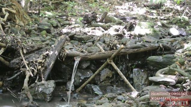 Ormanda öyle bir şey yaptı ki! YouTube videosu milyonlar izlendi