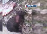 Sakarya'da köpek olayından sonra bir vahşet daha: Ön iki ayağı kesilmiş kedi bulundu