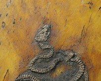 Dünya tarihinin en eski piton yılanı!