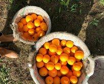 Rüyada portakal görmek ne anlama gelir?