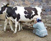 Rüyada süt sağdığını görmek ne anlama gelir?
