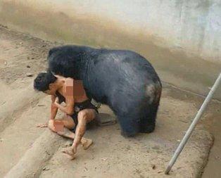 Dehşet! Kafese giren adam ayıya böyle yem oldu...