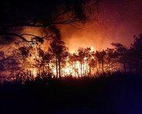 Muğla'da söndürülen yangın yeniden başladı!