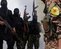 PKK/YPG en az 800 DEAŞ'lıyı serbest bıraktı!