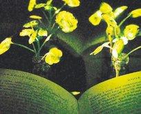 Bitki ışık açtı