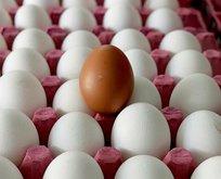 Yumurtada mutluluk var