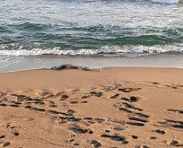 Sakarya sahilinde korkunç olay! Görenler dehşete düştü