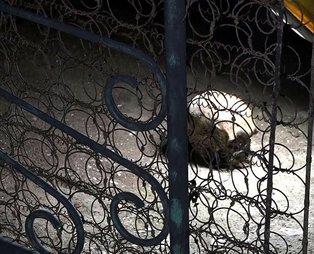 Antalya'da korkunç olay! Bir evin bahçesinde kafatası bulundu...