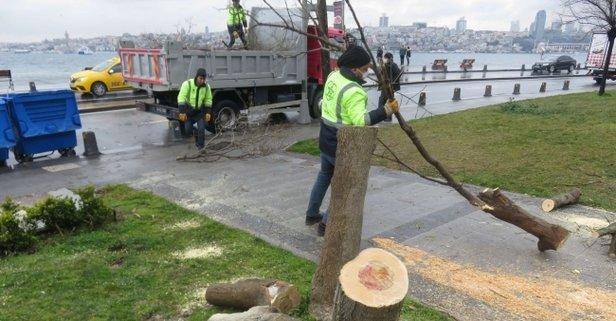 Üsküdar'da 2 ağaç kesen şüphelilere ibretlik ceza