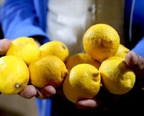 Limon güzeli