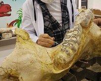 Kayseri'de 3 yılda bine yakın fosil bulundu