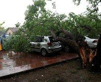 Şiddetli yağış ağaçları devirdi!